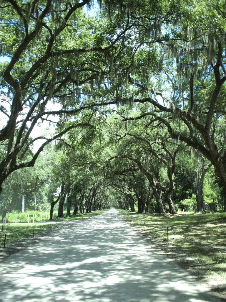 A slice of Savannah's early colonial history and its most scenic oak-lined drive at Wormsloe Historic Site