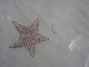 A lone starfish in shallow waters